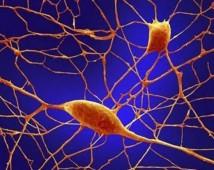 Terapia Neural