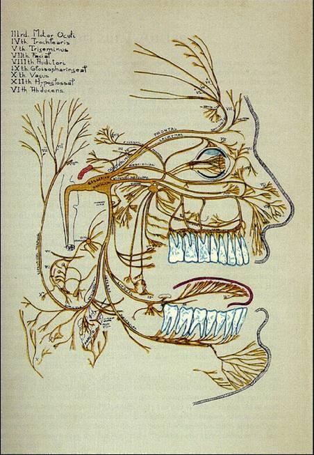 Odontologia neurofocal-trigémino